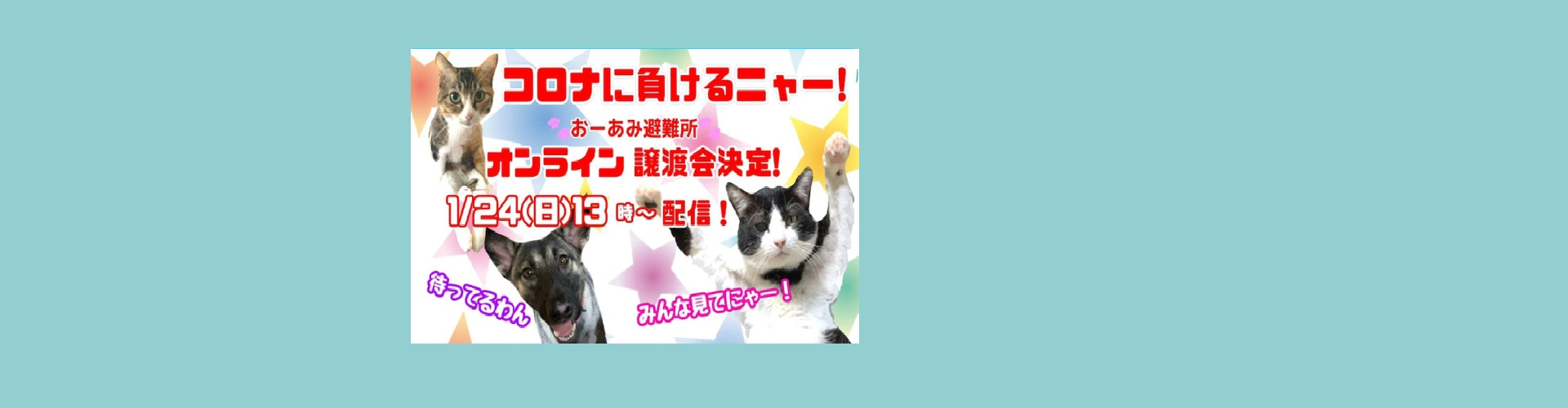 オンライン譲渡会(1/24)