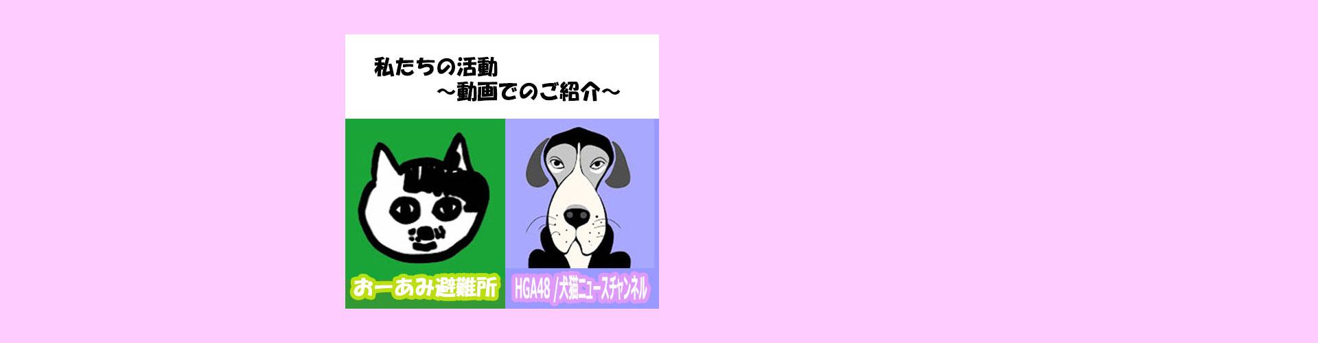 動画でご紹介!